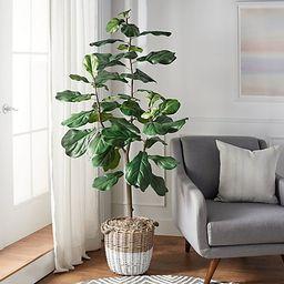 6' Faux Fiddle Leaf Tree in Starter Pot by Valerie | QVC