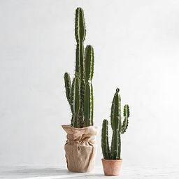 Faux Potted Saguaro Cactus   Pottery Barn (US)