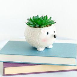 Hedgehog Flower Pot Succulent | Francesca's Collections