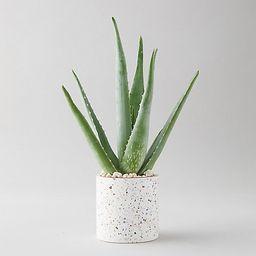 Aloe Plant, Terrazzo Pot | Terrain