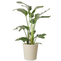 Costa Farms 10 in. White Bird in Paradise Planter-CO.3.WB11.PARWHT - The Home Depot | The Home Depot