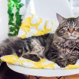 Ginkgo Yellow Catnip Cuddler. Refillable Catnip Bed. Catnip | Etsy | Etsy (US)
