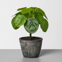 """6.5"""" Faux Pilea Potted Plant - Hearth & Hand™ with Magnolia 