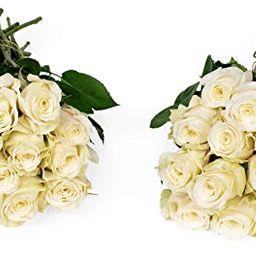 Benchmark Bouquets 50 White Roses Farm Direct (Fresh Cut Flowers)   Amazon (US)