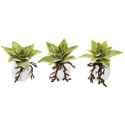 """6"""" Dusty Succulent Artificial Plant in White Vase (Set of 3) 