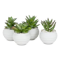 Abbott Faux Plants - Green Glitter Potted Succulents - Set of Four | Zulily