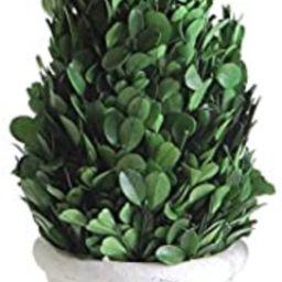 "Creative Co-op 11"" Preserved Boxwood Cone Shaped Clay Pot Topiary, Medium, Green,DA5562   Amazon (US)"