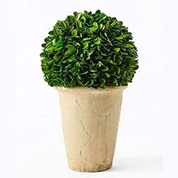 Boxwoodworld preserved boxwood green plant for home decor classic ball on pot design 11 inch high...   Amazon (US)