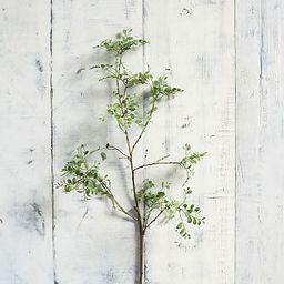 Faux Green Petal Leaf Branch   Pottery Barn (US)