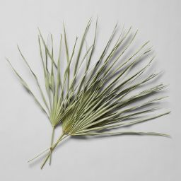 Set of Three Mexican Fan Palms | Bloomist