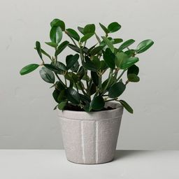 """7.5"""" Mini Faux Bean Potted Plant - Hearth & Hand™ with Magnolia 