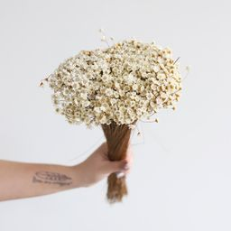Dried Star Flower | Afloral (US)