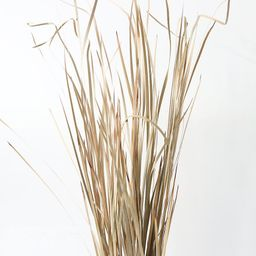 """Natural Preserved Tall Wild Grass 40"""" - 55"""" 