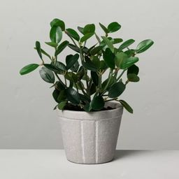 """7.5"""" Mini Faux Bean Potted Plant - Hearth & Hand™ with Magnolia   Target"""