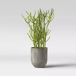 Faux Indian Tree Spurge Plant in Gray Pot - Project 62™   Target
