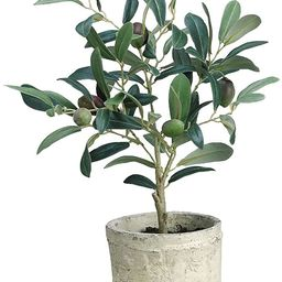 """Green Plastic Potted Olive Tree - 12""""H 