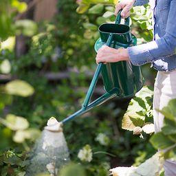 Haws Professional Long Reach Watering Can | Terrain