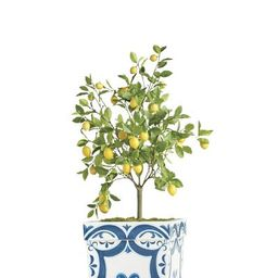 50' Outdoor Lemon Potted Tree   Frontgate   Frontgate