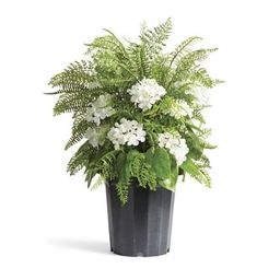 Outdoor Mixed Ferns and Hydrangea Urn Filler   Frontgate   Frontgate