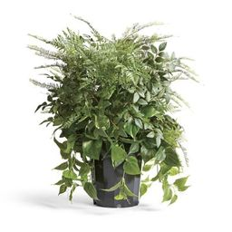 Outdoor Mixed Foliage Urn Filler   Frontgate   Frontgate