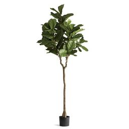Outdoor Fiddle Leaf 7' Tree   Frontgate   Frontgate