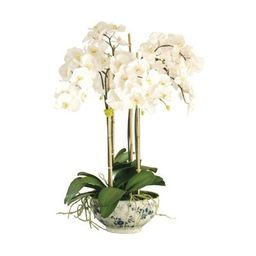 Phalaenopsis in Rose Trellis Vase   Frontgate   Frontgate