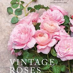 Vintage Roses: Beautiful Varieties for Home and Garden   Amazon (US)