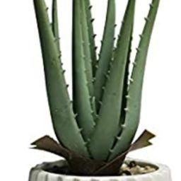 Noble House Potted Artificial Plant Decoration,Faux Natural Aloe Plant in Ceramic Pot, Faux Succu... | Amazon (US)