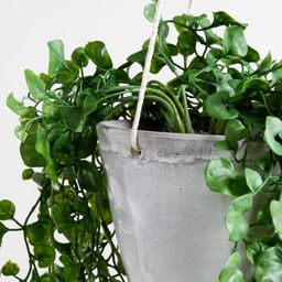 Artificial Trailing Ficus Hanging Plant in Pot + Reviews | Crate and Barrel | Crate & Barrel
