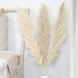 WTS Natural Dried Pampas Grass Decor - 3 Beige Stems (48'' Tall) - Tall Stemmed Real Pampas Grass...   Amazon (US)