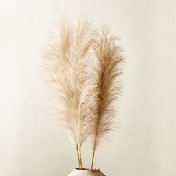 "Faux Pampas Grass Taupe Stem 39"" Set of 3 + Reviews   CB2   CB2"