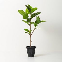 Faux Audrey Ficus Tree - Hearth & Hand™ with Magnolia | Target