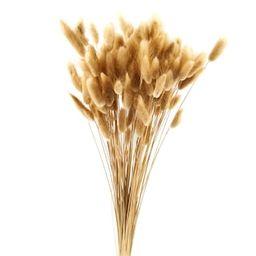 Dried Lagurus Bunch by Ashland® | Michaels Stores