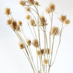 """Dried Thistle Flowers in Natural Tan - 28-32"""" Tall 