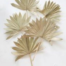 Pack of 5 - Natural Sun Palm Leaves | Afloral (US)