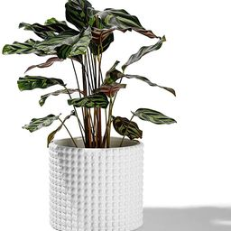 POTEY 055102 Planter Pots Indoor - 6.1 Inches Ceramic Vintage-Style Hobnail Textured Flower Plant... | Amazon (US)