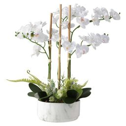 White Real Touch Orchid Arrangement   Zulily