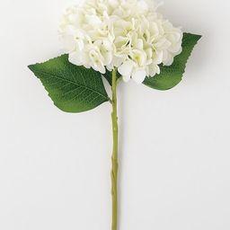 White Hydrangea Stem   Zulily