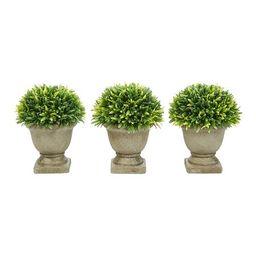 Podocarpus Grass Artificial Plant in Concrete Pot - Set of Three   Zulily