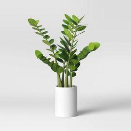 "23"" x 18"" Artificial Zamioculcas Zamiifolia Plant in Pot - Project 62™ | Target"