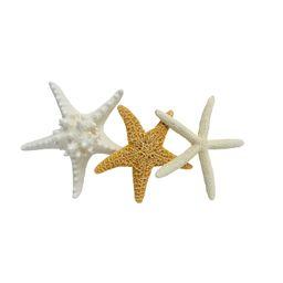 Starfish Shell Beach Décor, 1 Each | Walmart (US)