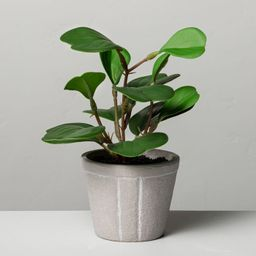 """7"""" Mini Faux Hoya Heart Potted Plant - Hearth & Hand™ with Magnolia   Target"""