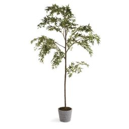 "Maple Tree In Pot 84""   Scout & Nimble"