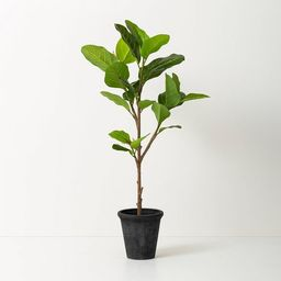 Faux Audrey Ficus Tree - Hearth & Hand™ with Magnolia   Target