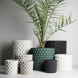 Cloudy 1-Piece Ceramic Pot Planter   Wayfair North America