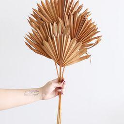 Pack of 5 - Terracotta Orange Sun Palms | Afloral (US)