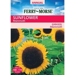 Ferry-Morse Sunflower Mammoth Seed-X6544 - The Home Depot   The Home Depot