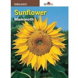 Burpee Sunflower Mammoth Seed-60740 - The Home Depot   The Home Depot