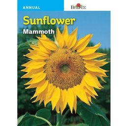 Burpee Sunflower Mammoth Seed-57745 - The Home Depot   The Home Depot