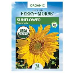 Ferry-Morse Sunflower Mammoth Organic Flower Seed-X1540 - The Home Depot   The Home Depot